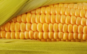 Fresh Corn Wallpapers 4