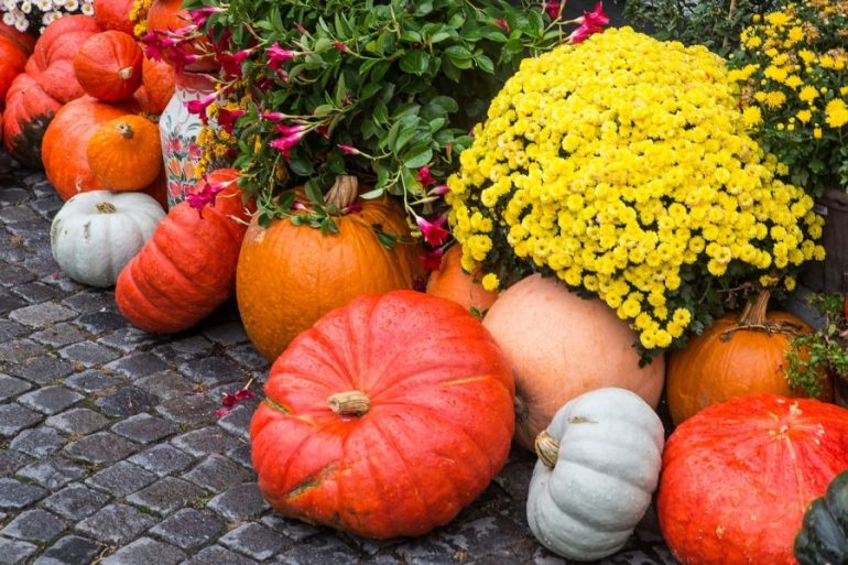 courges automne