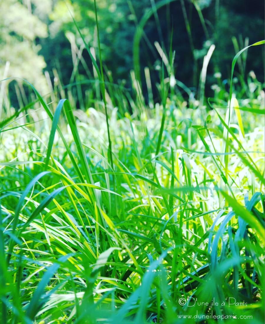 L'herbe, pour garder la hygge attitude en été