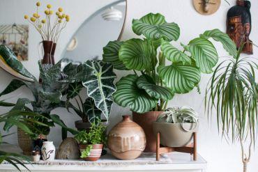 Plantes pour un effet Urban Jungle dans notre intérieur