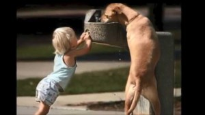 dog and child kindness