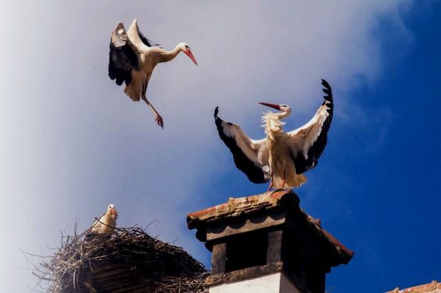 Las cigueñas de Alcala de Henares | SoyDe
