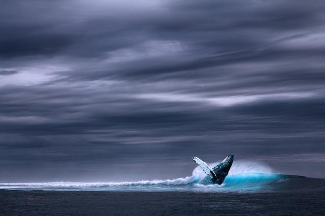 ballena azul Soy mama moderna