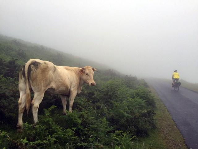 소와 자전거