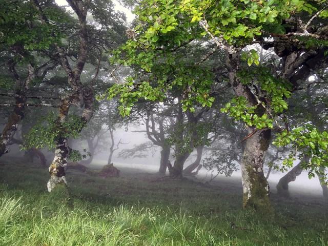 숲 속의 안개