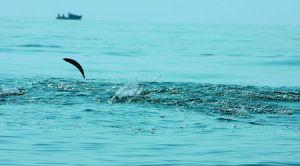 Георги Пейчев: Вчера излезе паламудът, но пострадалите от делфините ще са много повече 2
