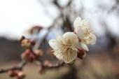 福島県福島市花見山公園の情報2017年2月22日 IMG_7779