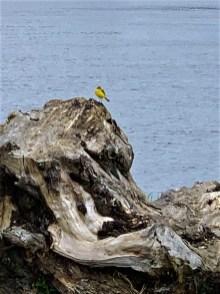plastyka ptak zdj (1)
