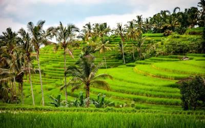 Indonésie Ancestrale de Sothys