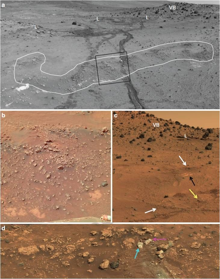 Spirit imagery shows opaline silica nodular outcrops adjacent to Home Plate showing typical stratiform expression. White outline highlights nodular silica outcrop. Rover wheel tracks are roughly 1 meter apart. Rolling wheels did not deform the roughly 6-inch-high high outcrop (lighter tracks) compared with the inoperative dragging wheel in a later traverse (darker track).