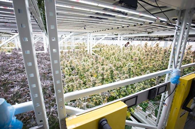 Building A Small Indoor Grow Room | Leancy Stock