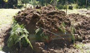 Biochar first pit soil covered