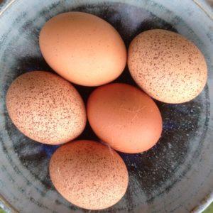 eggs from feeding lablab beans