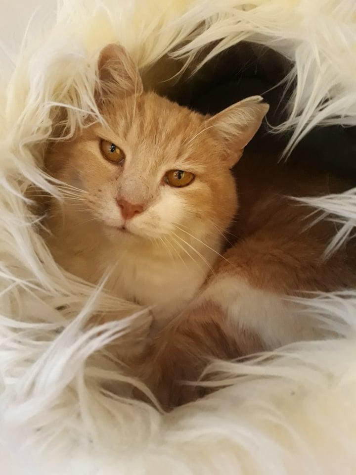 Pepito ♂ Bar à chats