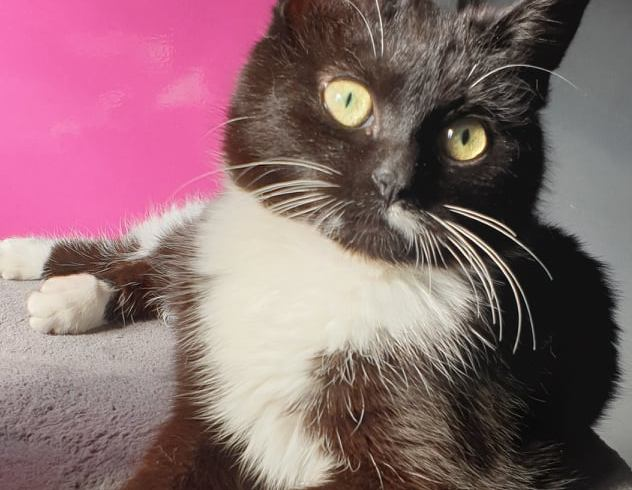 Holly ♀ grand chaton – FA