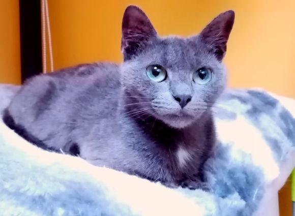 Blue ♀ Bar à chats