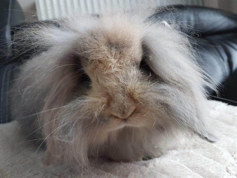 Bunny ♂ FA (réservé)