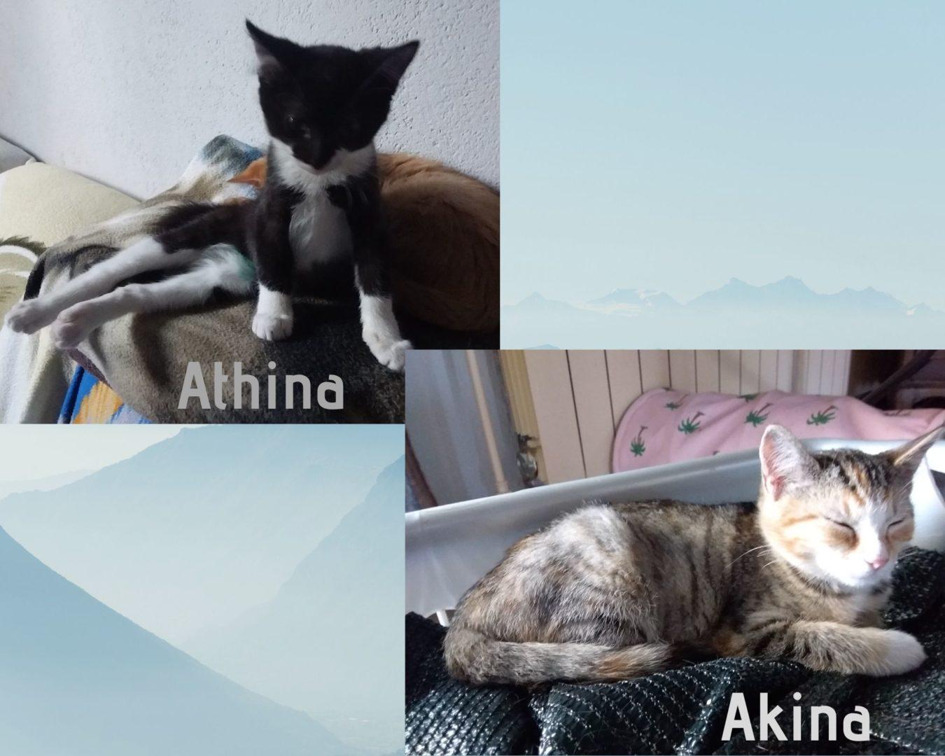 Akina & Atina ♀ chatons – FA