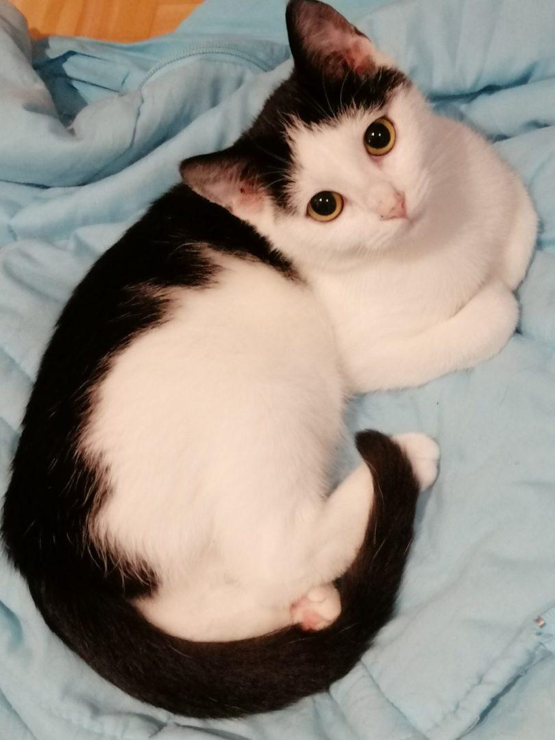 Idji ♀ grand chaton – FA ( Réservé )