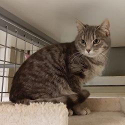 Raphael ♂  grand chaton – FA