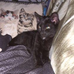 Zilou ♂ chaton – FA (visite en cours)