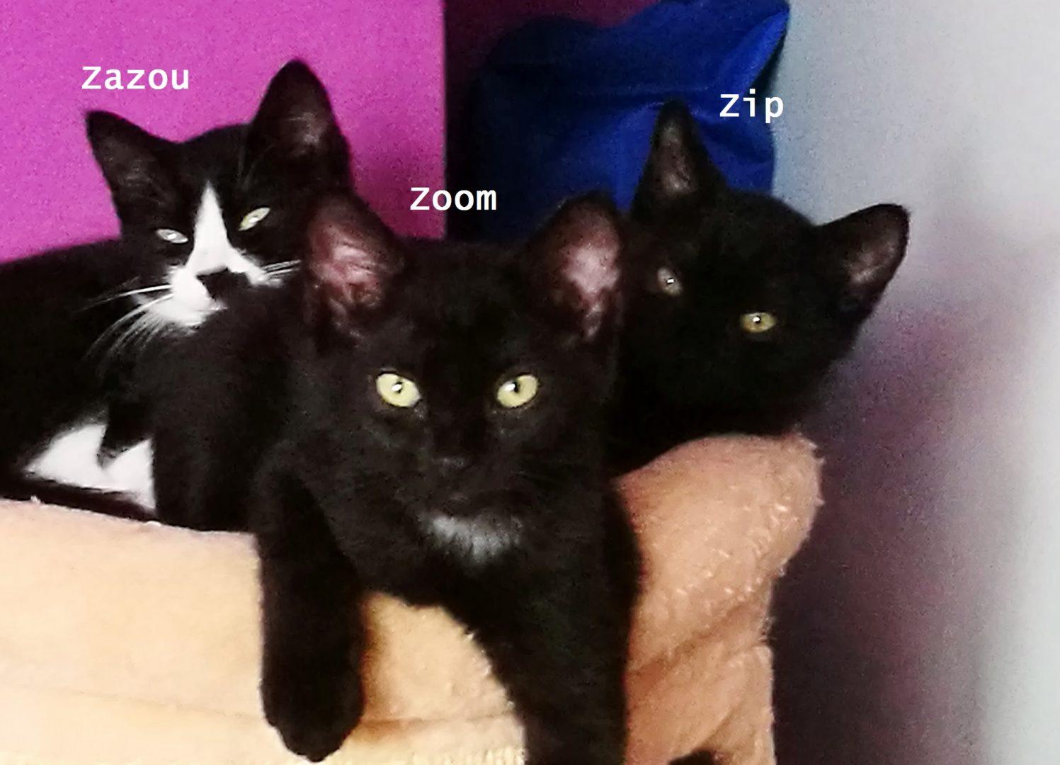 Zoom ♂ chaton – FA