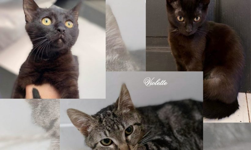 Vaïana, Violette ♀ & Vlad ♂ chatons – FA