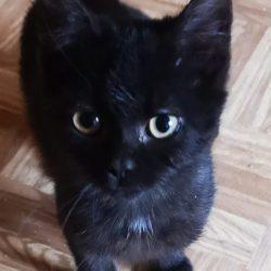 Bonnie ♀ chaton – FA (demande en cours)
