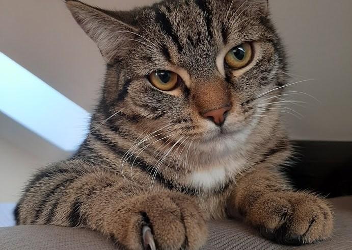 Boon ♂ grand chaton – FA