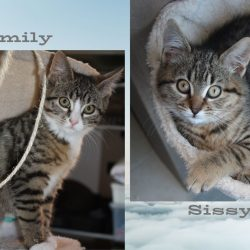 Smily & Sissi ♀ chatons – FA