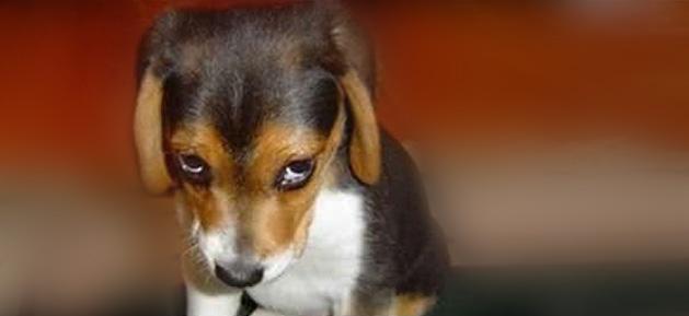 spa-martinique-petit-chien-triste