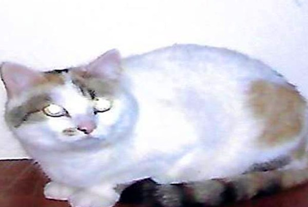 blanche-chatte
