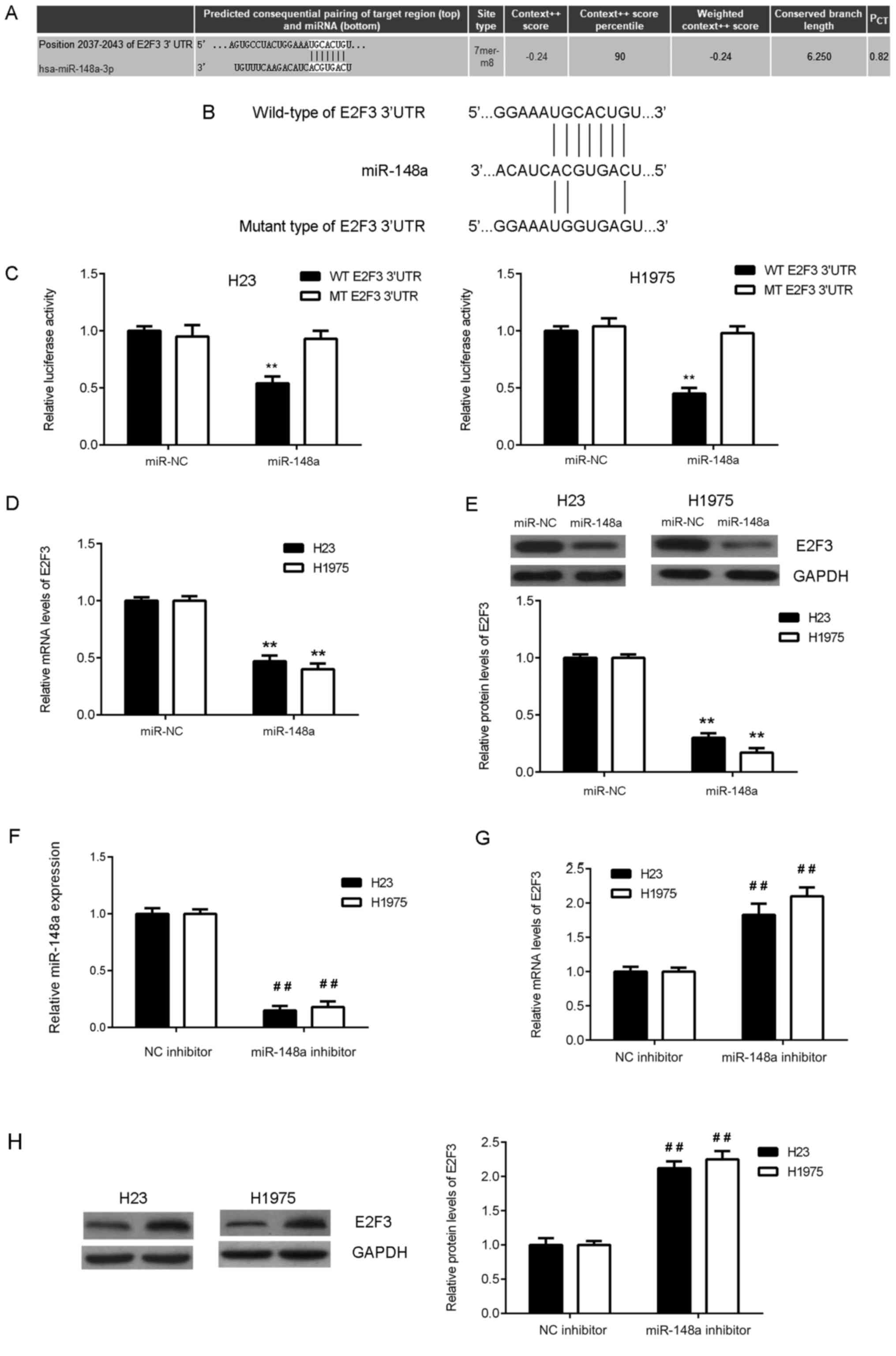 Microrna 148a Inhibits Cell Proliferation And Cell Cycle