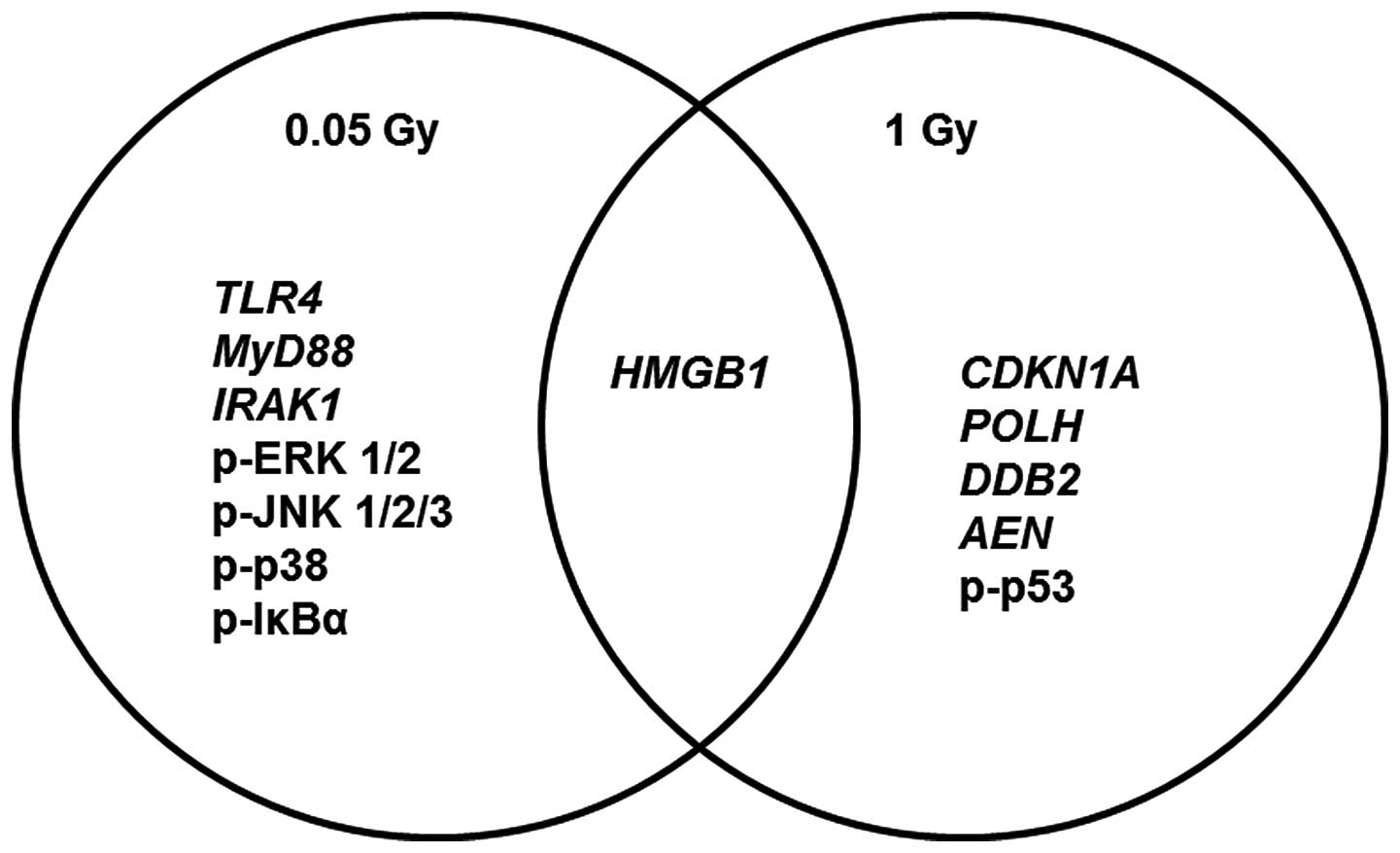 Low Doses Of Ionizing Radiation Induce Immune Stimulatory Responses In Isolated Human Primary