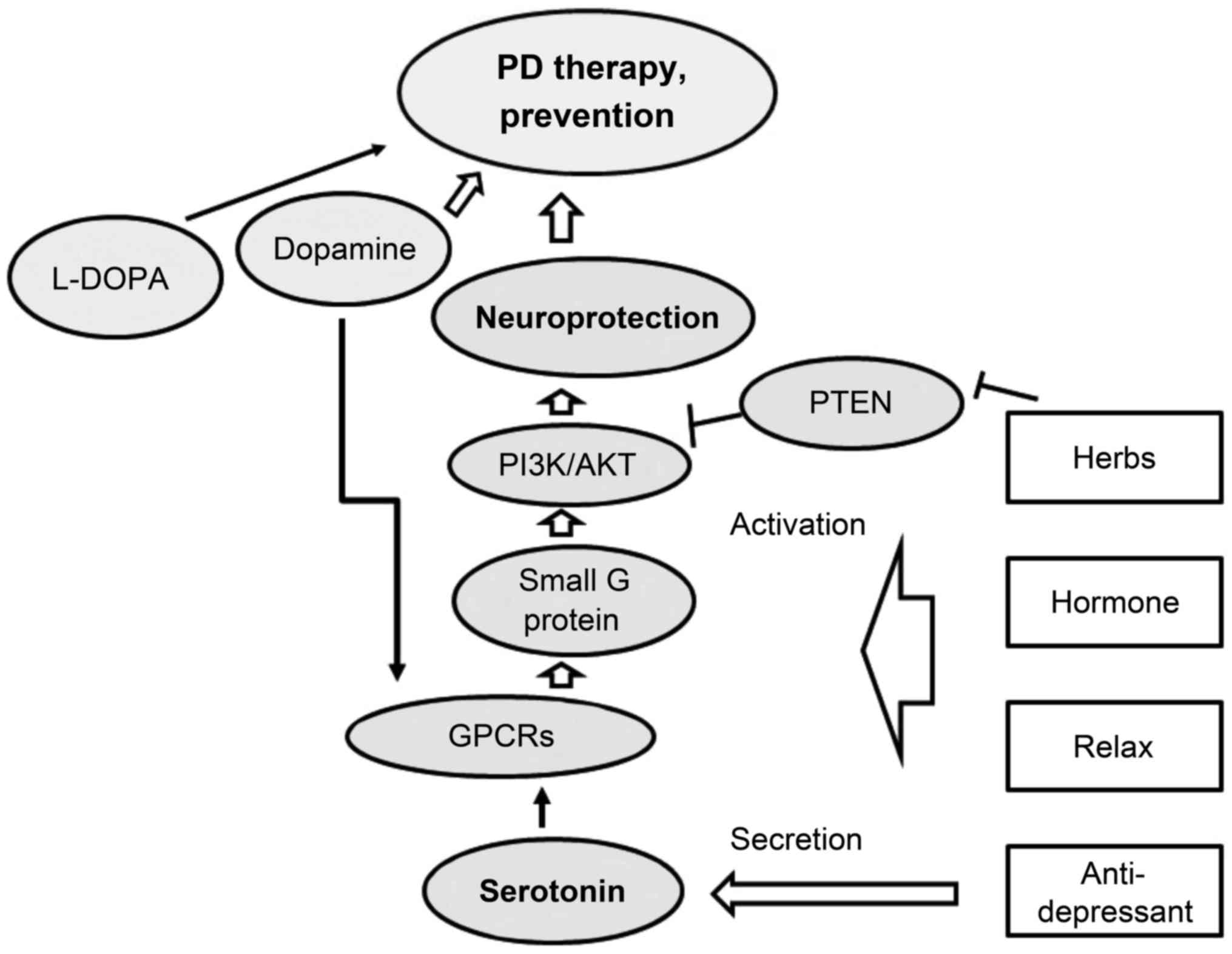 Pi3k Akt Signaling Mediated By G Protein Coupled Receptors