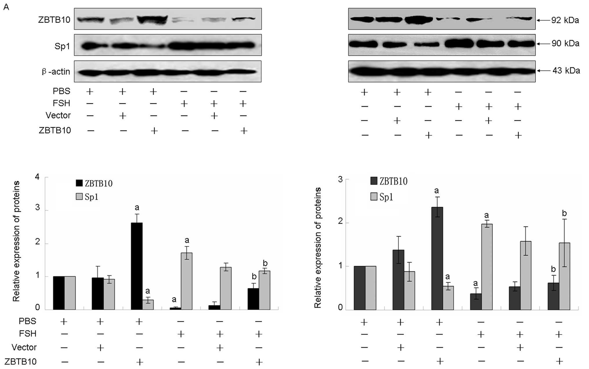 The Microrna 27a Zbtb10 Specificity Protein Pathway Is Involved In Follicle Stimulating Hormone
