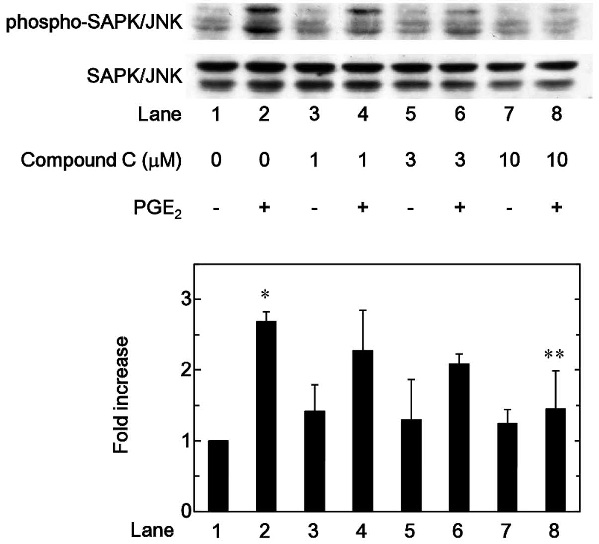 Regulation By Amp Activated Protein Kinase Of Pge2 Induced Osteoprotegerin Synthesis In Osteoblasts