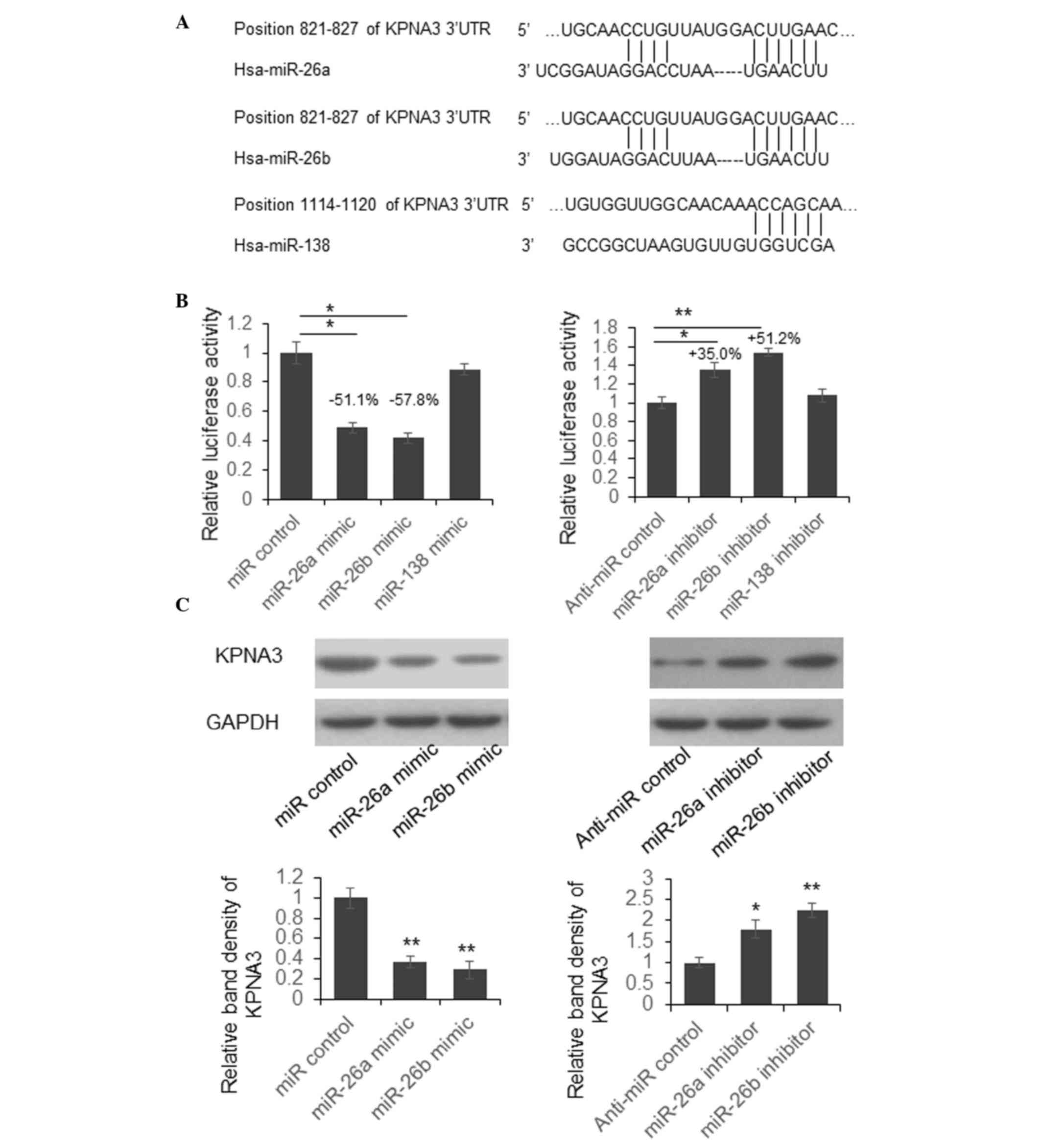 Reduced Mir 26a And Mir 26b Expression Contributes To The