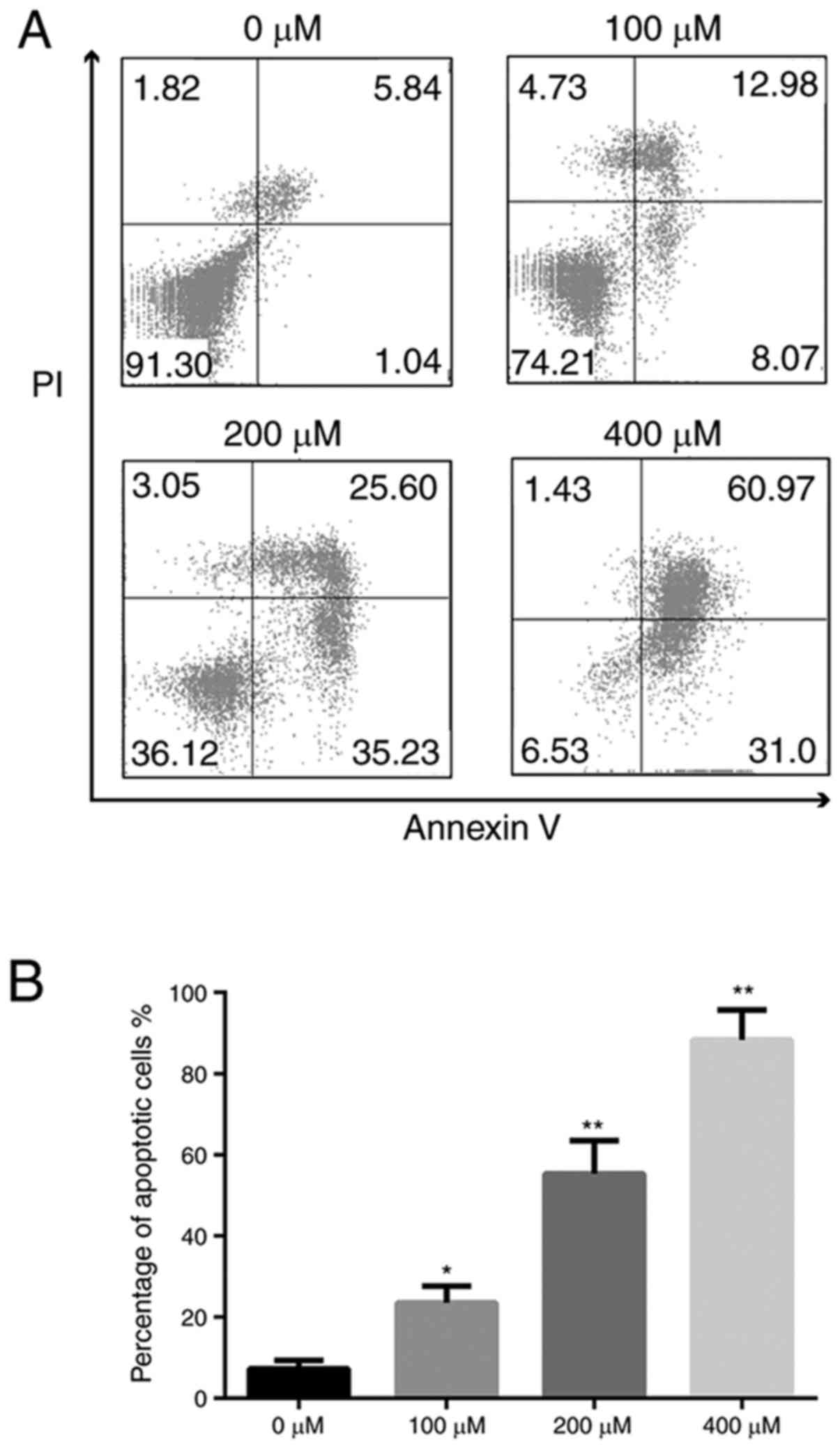 Induction Of Apoptosis In Nasal Polyp Derived Fibroblasts