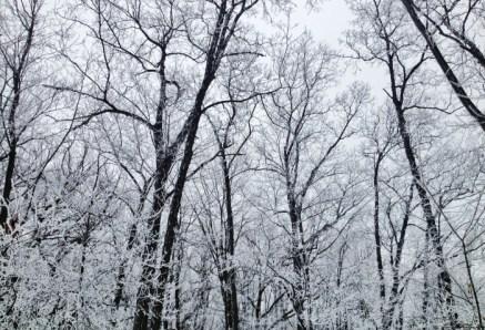 winter-14