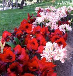 verbos-irregulares-en-presente-variedad-flores.jpg