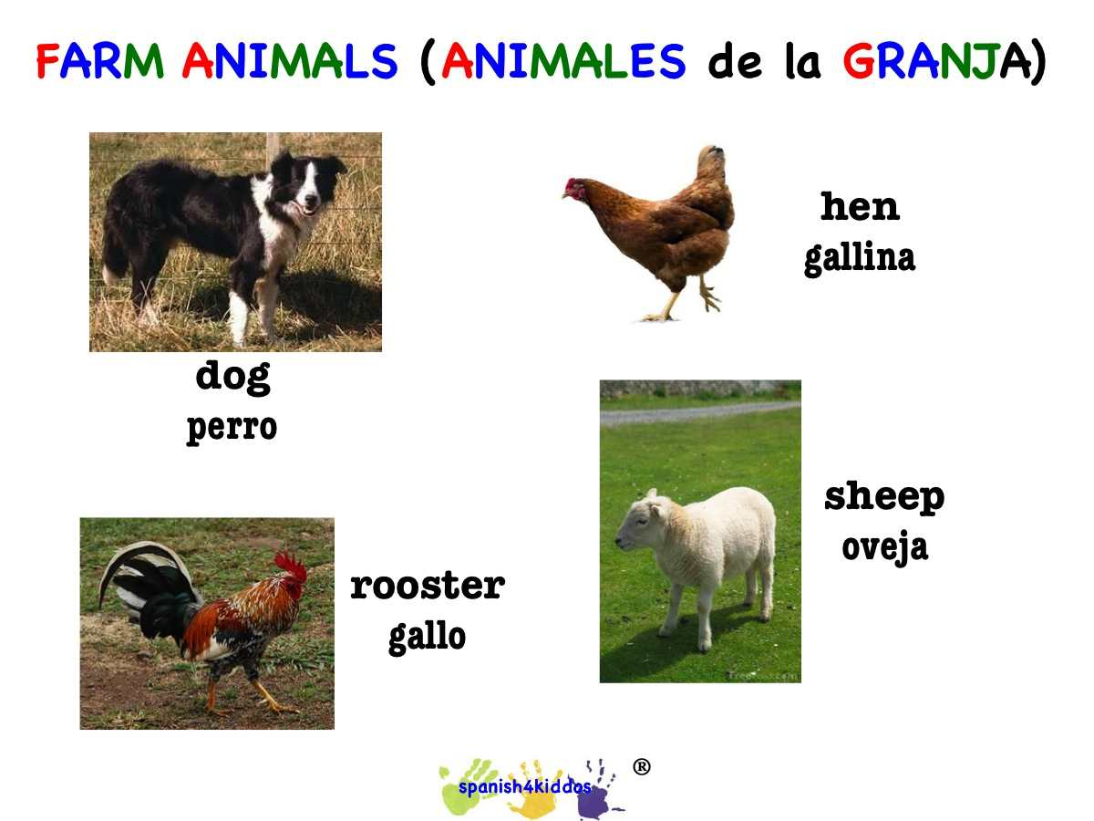 Dog Hen Rooster And Sheep Spanish4kiddos Educational Resources