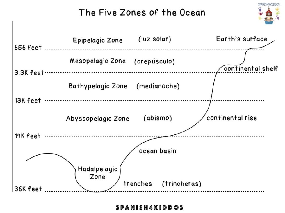 five zones of the ocean