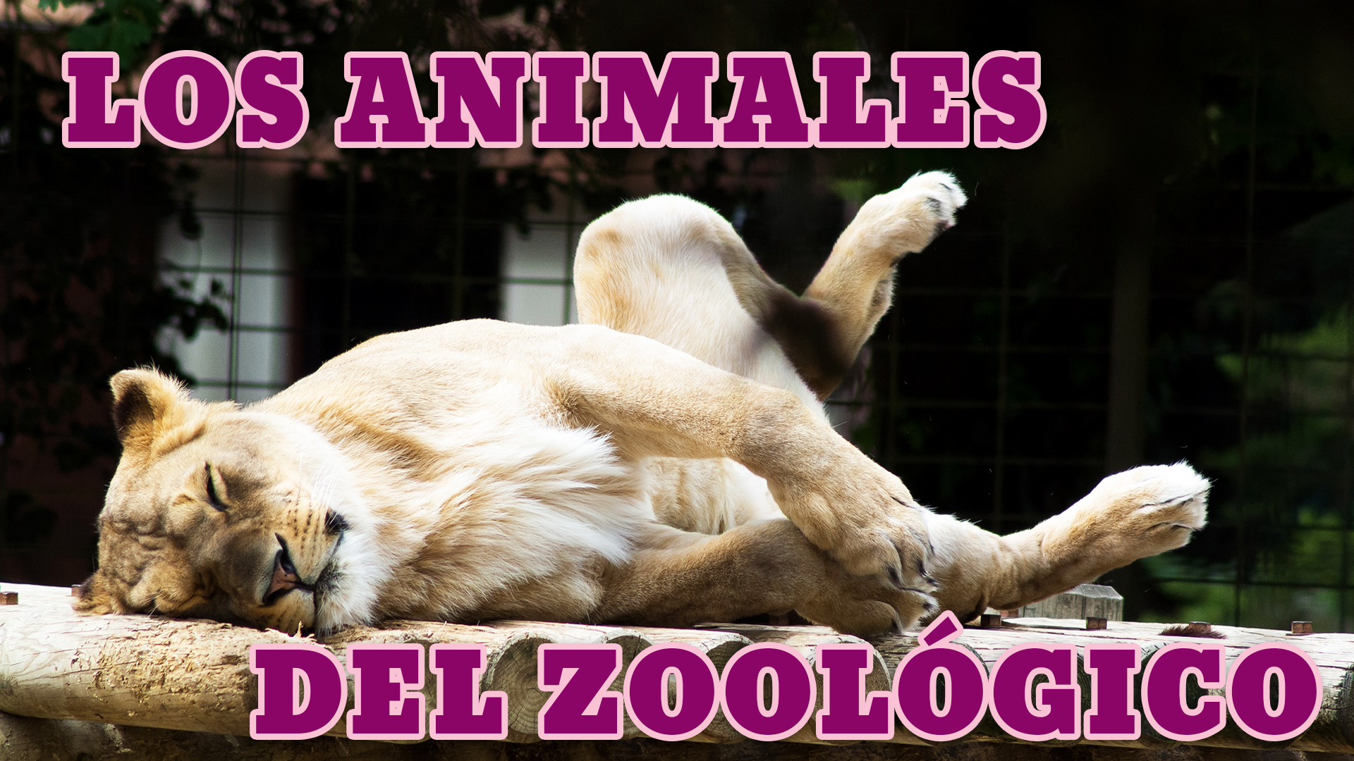 Zoo Animals In Spanish List Phrases And Listening