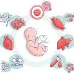 Cord blood - Umbilical Cord Blood Benefits
