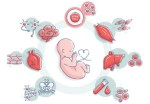 Cord Blood Facts: Benefits of your Baby's Umbilical Cord Blood after Birth