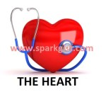 Heart: 9 Common Foods for a Healthy Heart – Spark Gist