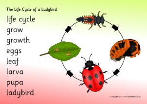 Ladybird Printables For Primary School Sparklebox
