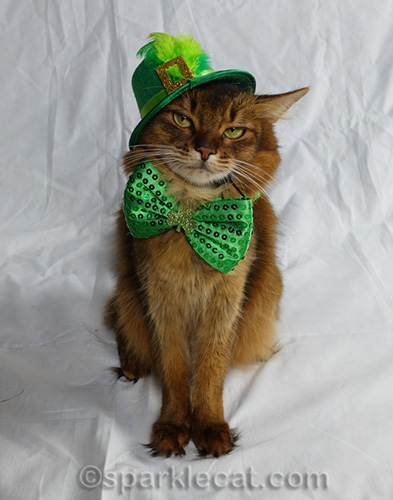 somali cat in St. Catrick's hat, looking dubious