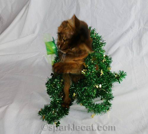 somali cat removing St. Catricks Day hat